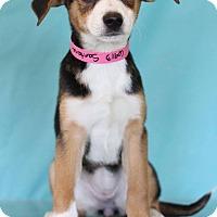 Adopt A Pet :: Santana - Waldorf, MD