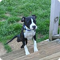 Adopt A Pet :: Delci - Knoxville, TN