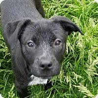 Adopt A Pet :: River - Davisburg, MI