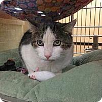 Adopt A Pet :: Emerson - Monroe, GA