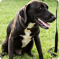 Adopt A Pet :: Prince - Natchitoches, LA
