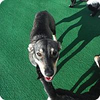 Adopt A Pet :: Kiki @ Petsmart Sat 11-4 - Atascadero, CA