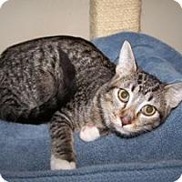 Adopt A Pet :: K-DelMar1-Eagle - Colorado Springs, CO