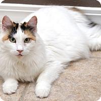 Adopt A Pet :: Persimmon - San Antonio, TX