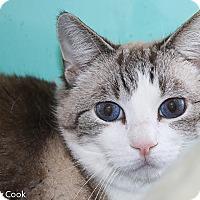 Adopt A Pet :: Texas Rose - Ann Arbor, MI