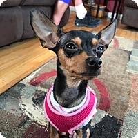 Adopt A Pet :: Ava - oxford, NJ