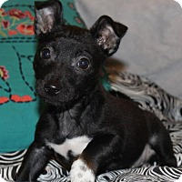 Adopt A Pet :: Stellaluna - Corona, CA