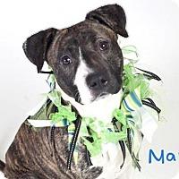 Adopt A Pet :: *MARGO - Sacramento, CA