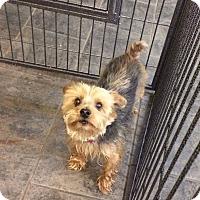 Adopt A Pet :: Gordon - Newport, KY