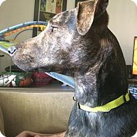 Adopt A Pet :: Junior - Maple Grove, MN