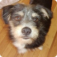 Adopt A Pet :: Fritz - Hollywood, FL