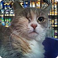Adopt A Pet :: Svenlok - Modesto, CA