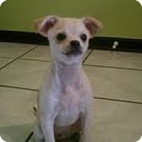Adopt A Pet :: Rocky - Orange Park, FL