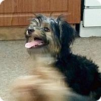 Adopt A Pet :: oh HENRY - Boca Raton, FL