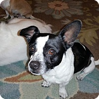 Adopt A Pet :: Jake - PENDING, in Maine - kennebunkport, ME