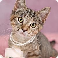 Adopt A Pet :: GG - Plymouth, MN