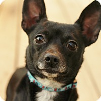 Adopt A Pet :: Lenny - Romeoville, IL