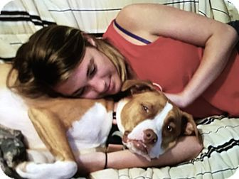 Pit Bull Terrier/Boxer Mix Dog for adoption in Lincolnton, North Carolina - Roxie
