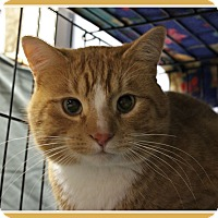 Adopt A Pet :: Poe - New Richmond,, WI