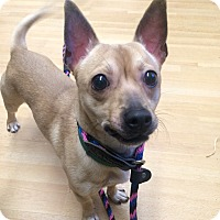 Adopt A Pet :: Mr. Bean in CT - Manchester, CT