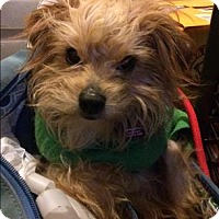 Adopt A Pet :: Barney - Encino, CA