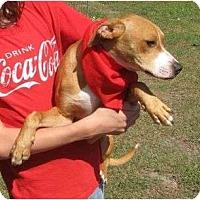 Adopt A Pet :: Chuck - Snellville, GA