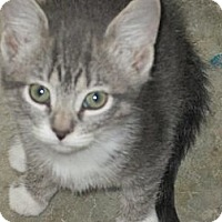 Adopt A Pet :: Flash - Jeffersonville, IN