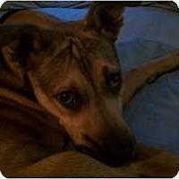 Adopt A Pet :: Marina - Fresno, CA