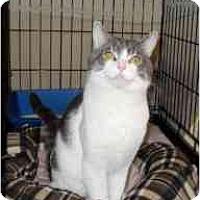 Adopt A Pet :: Blitzen - Milwaukee, WI