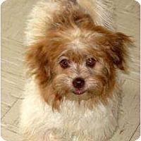 Adopt A Pet :: SIR ODIUS MAXIMUS - Plainfield, CT