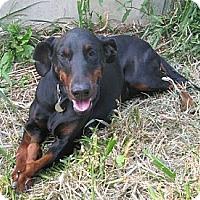 Adopt A Pet :: Peggy--pending - New Richmond, OH