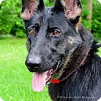 Adopt A Pet :: Meryl - Indianapolis, IN