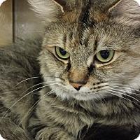 Adopt A Pet :: July - Chesapeake, VA