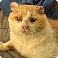 Adopt A Pet :: DuSable - Chicago, IL