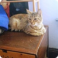 Adopt A Pet :: Iris - Putnam, CT