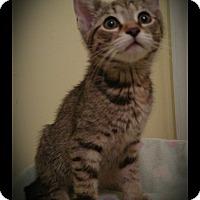Adopt A Pet :: Jolie (adoption pending) - Richmond, VA
