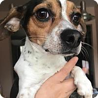 Adopt A Pet :: Rico - Woodbridge, VA