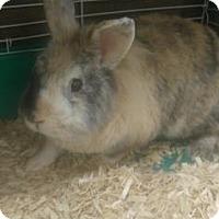 Adopt A Pet :: Joe Dirt - Titusville, FL