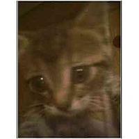Adopt A Pet :: Stormy - Owasso, OK