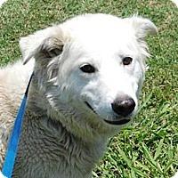 Adopt A Pet :: Blondie - Justin, TX