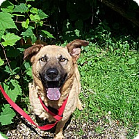 German Shepherd Dog/Chow Chow Mix Dog for adoption in Antioch, Illinois - Antioch