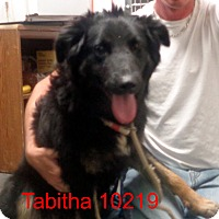 Adopt A Pet :: Tabitha - Greencastle, NC