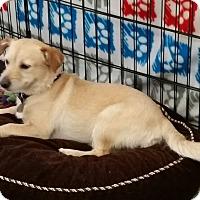 Adopt A Pet :: Odie - Phoenix, AZ
