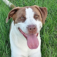 Adopt A Pet :: Smiley Miley - Orange Lake, FL
