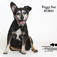 Adopt A Pet :: Peggy Sue  (Foster Care) - Baton Rouge, LA