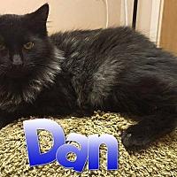 Adopt A Pet :: Dan - Toledo, OH