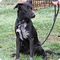 Adopt A Pet :: Scott Hamilton (Neutered) - Marietta, OH