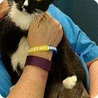 Adopt A Pet :: Agatha (cc) - Richmond, VA