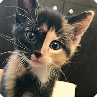 Adopt A Pet :: Aurora 2 - Austin, TX