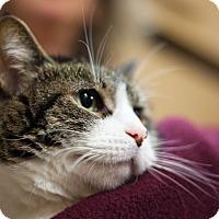Adopt A Pet :: Mo - Worcester, MA